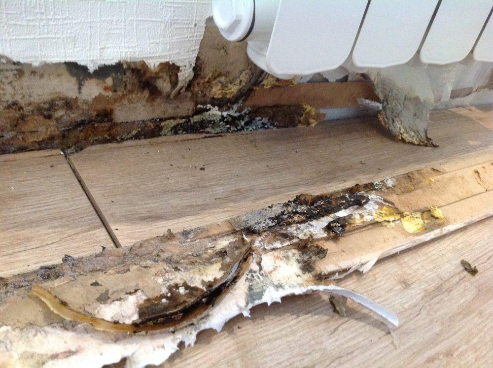Champignon hyphoderma mutatum sur plinthe et parquet